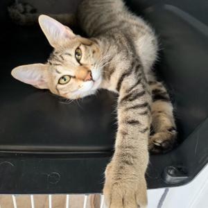 10月29日 譲渡会参加ネコを紹介します!③