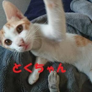 10/29参加ネコを紹介します!15
