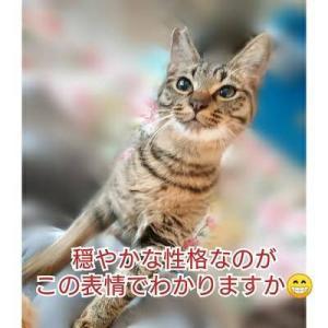 10/29参加ネコを紹介します!14