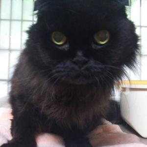 12月10日 譲渡会参加ネコを紹介します!⑨