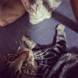 2/24参加ネコを紹介します!⑦