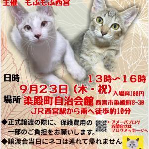 【写真参加】9/23参加ネコ「おちび」