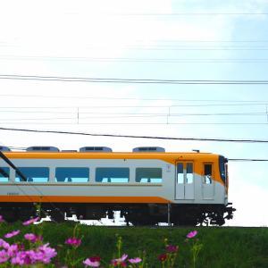 奈良・近鉄吉野線壺阪山駅 コスモスと近鉄電車