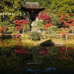 奈良・円成寺庭園の紅葉 見頃!(2019年11月10日撮影)