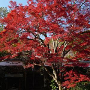 京都府亀岡・神蔵寺 紅葉(2019年11月16日撮影)