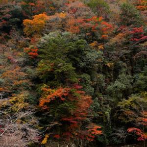 三重 青蓮寺湖・香落渓(かおちだに)の紅葉 2