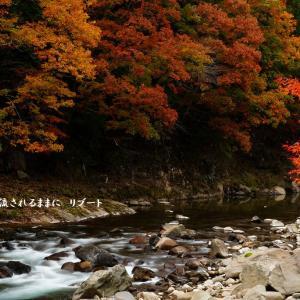 三重 青蓮寺湖・香落渓(かおちだに)の紅葉 最終回