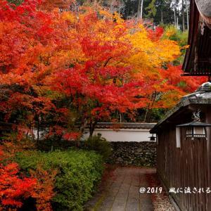 京都府亀岡 鍬山神社 紅葉 2