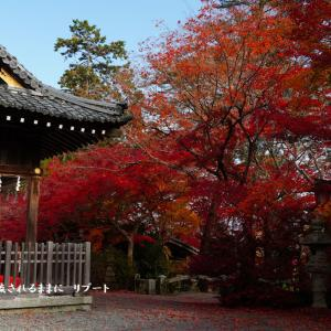 京都府亀岡 鍬山神社 紅葉 最終回
