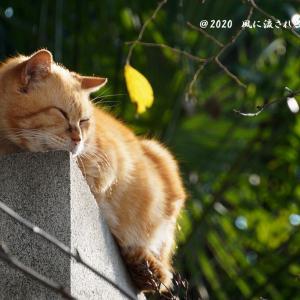 冬晴れの日の口縄坂の猫たち