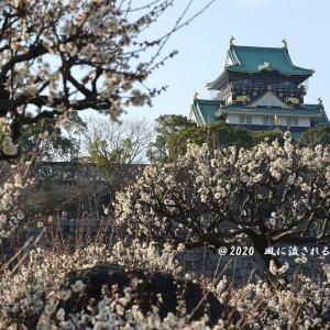 春近し! 大阪城梅林 大阪城と梅(2020年2月2日撮影)