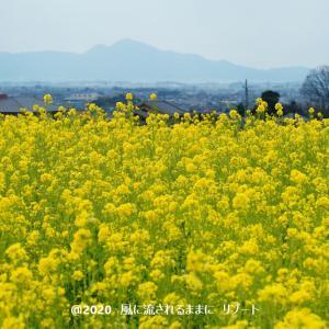 奈良・天理 山の辺の道 菜の花など