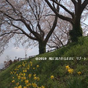春爛漫! 奈良・唐古・鍵史跡公園(からこかぎいせき) 桜 パート2
