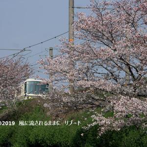 とある場所で撮影した桜と列車