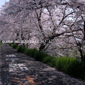 春爛漫! 奈良・箸尾駅近くの桜並木 パート2