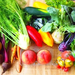 食物繊維とは。食事摂取基準2020対応かんたん要点まとめ。