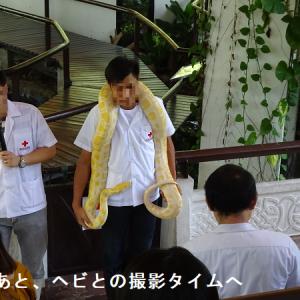 バンコク・タイ赤十字協会スネークファーム
