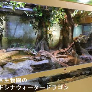 家族向けにきれいなレイアウトで爬虫類両生類を見せる足立区生物園
