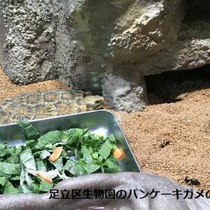 パンケーキガメの飼育方法3選