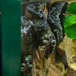 プロから学ぶコケガエルの飼い方3選
