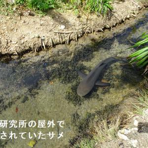なぜこんな場所に?離島の生物研究所、黒島研究所探訪記