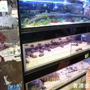香港アクア系マーケットでの爬虫類販売風景