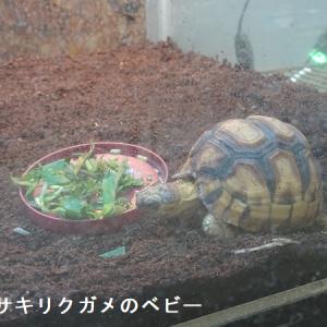リクガメ飼育者必見、横浜・野毛山動物園爬虫類館