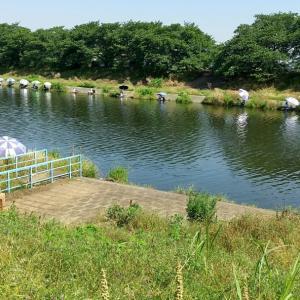 6月9日   びん沼  砂塚橋下流南岸