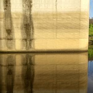 9月28日   びん沼 新河岸放水路 立堀橋 南岸