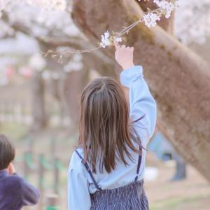 ★それぞれの桜