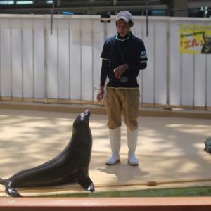高知で水族館~「桂浜水族館」アットホームでこぢんまり。いろんなショーやってるよ<後編>
