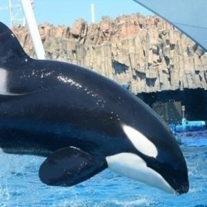爽やか北海道2020 クジラを探す知床ネイチャークルーズ&羅臼(ラウス)ビジターセンター
