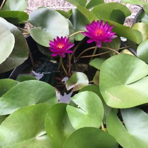 新たな植物