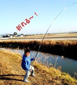 延べ竿で鯉を釣るのが大好きな理由