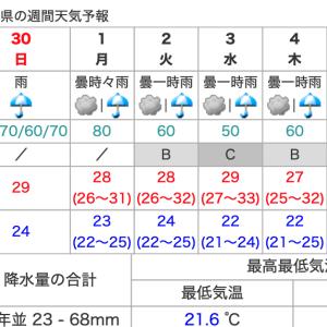乃木坂46 夏の全国ツアー2019工程表①愛知