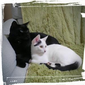 レースの次のポイント練習と白黒猫の近況