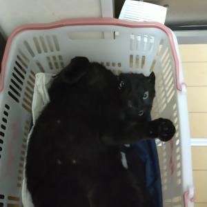 買われたい黒猫と灼熱のEペース走のお話