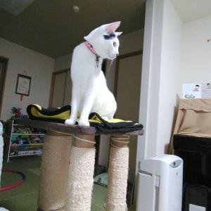 タワーの上で威張る白猫と1500mTTの結果報告のお話