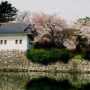 小田原城天守閣やお堀などを背景に咲き誇る美しい桜の競演