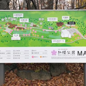 【札幌】 紅櫻醸造所|紅櫻公園|ジン
