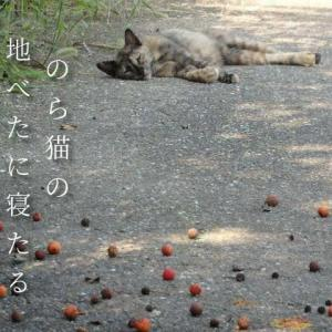 のら猫の地べたに寝たる秋暑かな