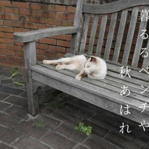 捨て猫の暮るるベンチや秋あはれ
