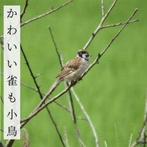 かわいい雀も小鳥おいでここへ