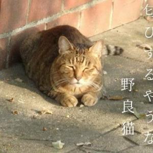 野良猫の小さき陽だまり秋深し
