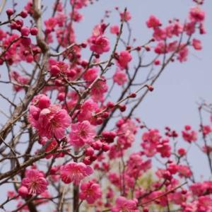 早春や蜂蜜の溶けにくきティー