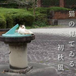 のら猫の振り向き見てる初秋風