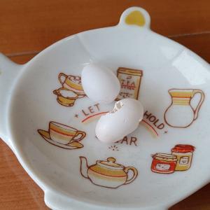 文鳥、また卵を産んでしまった…そして割る