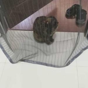 【猫写真】と【俺飯】と【その他(レジ袋廃止のその後)】