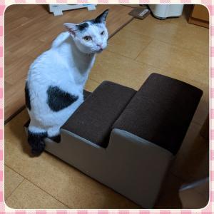 猫用ステップの改良