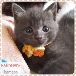 子猫用の首輪